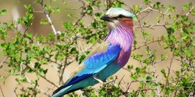 Birding - 18 Day North-eastern cirular route, South Africa
