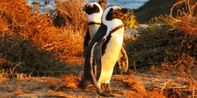 Birding - 12 Day Western Cape and Garden Route